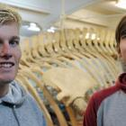 Blake Hornblow (left) and Zachary Penman view the fin whale skeleton at Otago Museum after...