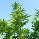 Cannabis-NAD-ipad_300x200.jpg