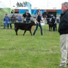 Canterbury A&P show judge Dr Tom Turner, of Ohio, casts an  eagle eye over entrants in the junior...
