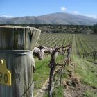Carrick Winery, Central Otago. Photo by Charmian Smith.