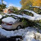 Cars sit under a tree that fell on them after an early snowfall in Worcester, Massachusetts....