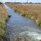 CC5irrigation7.JPG