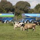 Dairy giant Fonterra is still considering heading overseas with inaugural bond issues, possibly...