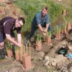 DairyNZ's Justin Kitto (left) and Clutha Development's Hamish Anderson get stuck in improving...