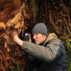 Dan Barrett searches for a peripatus specimen in a Dunedin reserve earlier this year. Photo by...