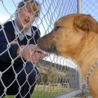 DCC animal control officer Roz McDonald gives Blaze, an unregistered dog at the Dunedin Animal...