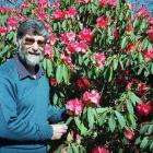Denis Hughes in his element, alongside a rhododendron. Photo: ODT files.