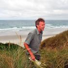 Department of Conservation biodiversity ranger Jim Fyfe searches for a sea lion pup in the sand...