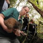 Department of Conservation Haast Tokoeka team leader Neil Freer prepares one of 10 tokoeka kiwis...