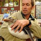 Doc Biodiversity Assets programme manager David Agnew holds a yellow-crested royal penguin which...
