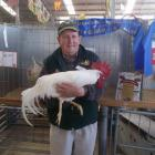 Doug Bain was thrilled to win grand champion poultry exhibit with this white Leghorn cockerel at...