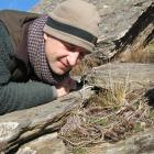 Dr James Reardon looks at a sub-adult Otago skink within the predator-proof fence at Macraes Flat...
