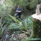 Dunedin City Council parks officer Scott Maclean views one of 13 trees in the city's Town Belt...