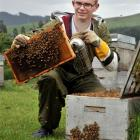 Dunedin pupil Hamish McMillan (18) has been selected as a finalist for his study on how the...