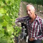 Eight Ranges Wines co-owner Trevor Deaker and dog Tussock check  some pinot grapes on the...