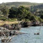 Erosion by the Te Rauone Beach Domain at Harington Point.