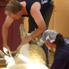 Fairlie shearer Tony Dobbs, shown here winning the Mackenzie Shears open blade shearing...