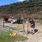 Fencing . . . Christchurch district winner Robin Hornblow, of Dunsandel YFC, demonstrates his...