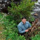 Fish and Game Otago operations manager Ian Hadland with the green waste dumped on the banks of...