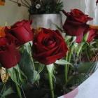 florist_susan_masters_of_amaryliss_for_flowers_pre_1702028767.JPG