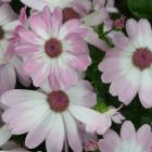 flower_power_for_fitness_7334862064.JPG