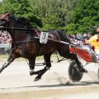 Franco Ledger, who gained a start in the New Zealand Cup with his win at Addington last night....