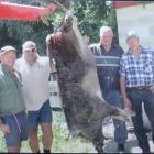 Frank Sole (left), Rick Reid, John Reid and Brent Woodford with the 166kg boar they shot in the...