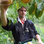 Fruitgrowers in Central Otago report an increase in the number of fruit pickers looking for work...