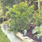 gardenthing.jpg