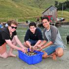 Gathering cockles from Papanui Inlet on Otago Peninsula yesterday are participants in the Ngai...