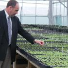 Gore District Council parks and reserves manager Ian Soper inspects some of the seedlings in the...