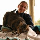 Gore SPCA manager Tanya Burke lets Daisy the cat get acquainted with some specially made woollen...