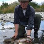 Fish and Game officer Gareth Hughes holds trout caught in the Hakataramea River which will be...