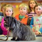 Hairy Maclary's four-legged friend, Delphi, visits the Dunedin Public Library yesterday. Photo by...