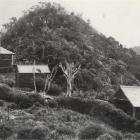 House belonging to early Fiordland explorer Richard Henry.