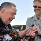 Huirapa Upoko (chief) David Ellison, of Karitane, blesses a robin held by University of Otago...