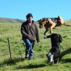 Hyde farmer Bevan Dowling with his dogs Fog and Kate, which cost him $108 to register with the...