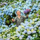 Hydrangea gardener Gerry Boyle is giving away the blooms from his massive flower garden at...