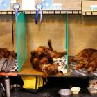 Irish setters rest on their benches during the first day of the Crufts Dog Show in Birmingham....