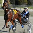 Irish Whisper, who continued his countdown to the Harness jewels with a trial win at Oamaru...