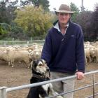 Johnny Duncan with halfbred rams on his Maniototo farm. Photo by Neal Wallace.