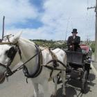 Julie Hall, of Dunedin, with her 1890 horse-drawn carriage in Oamaru. She will be providing...