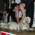 Justin Meikle glistens with sweat as he races through his final shear in the NZ Merino Shears...