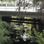 Kaikorai Stream near the site where sewage entered the waterway adjacent to Kaikorai Valley...