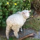 Larry the lamb. Photo supplied.