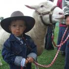 Levi Heffernan (2) took his hefty pet sheep Big Boy to the North Otago A and P Show. Photo by...
