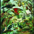 Many Pakeha New Zealanders had developed sentimental affection for native birds when this poster,...