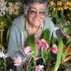 Margaret Harper admires some of the orchids she will display at the North Otago Orchid Club show...