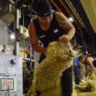 Mataura shearer Brett Roberts in action on his way to winning the Otago senior shearing title in...
