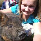 Moriah Tyrrell (10) took Fraggle the pig to the pet day at the North Otago A and P showgrounds...